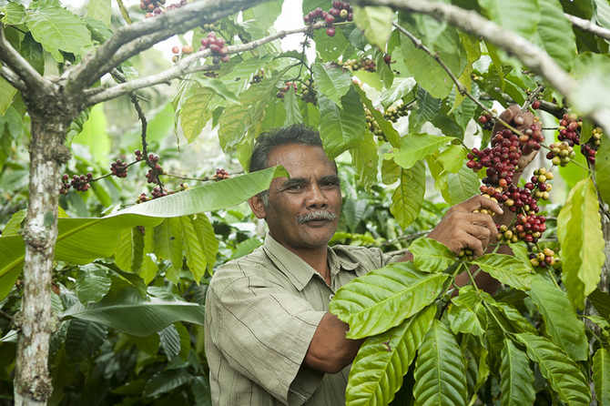Колумбийский кофе - сорта, цена, отзывы
