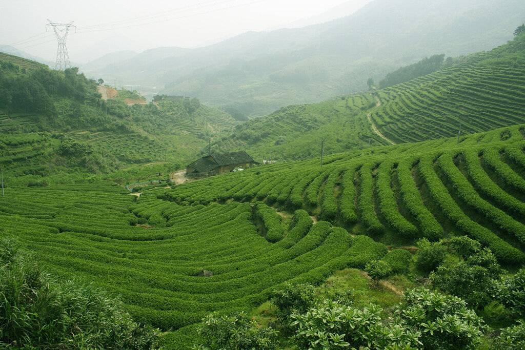 Нувара-элия, шри-ланка: горы, водопады и чайные плантации