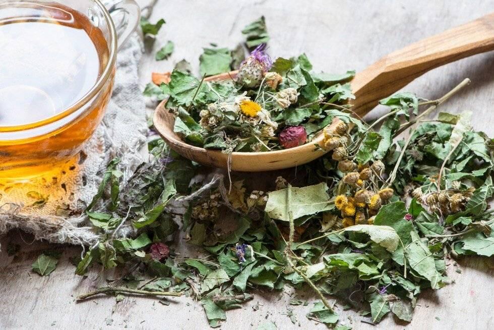 Чай с мятой и зверобоем лечебные свойства