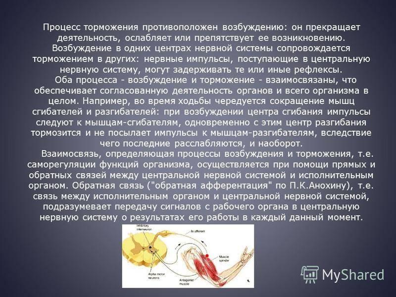 Причины и лечение повышенной нервной возбудимости