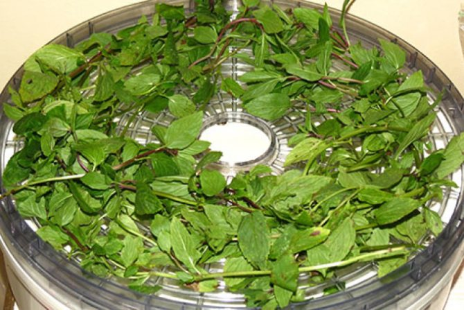Травяной чай: когда собирать, как хранить и готовить