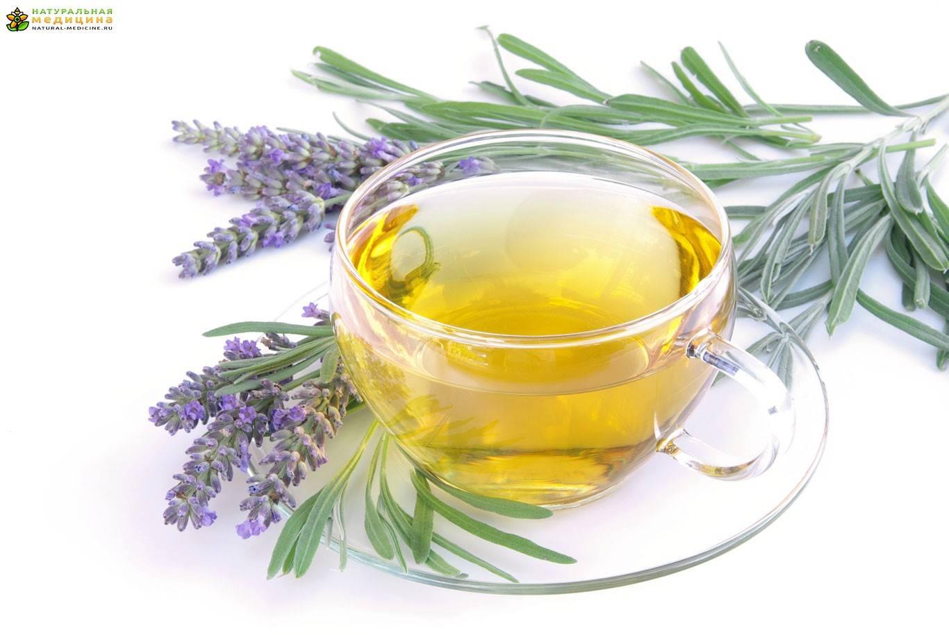 Шалфей и чай из шалфея — польза и возможный вред   польза и вред