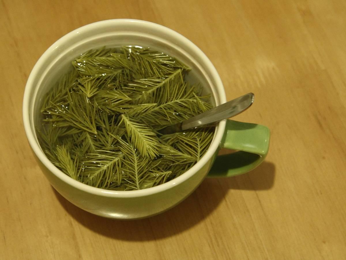 Чай из сосновых иголок польза и вред для организма