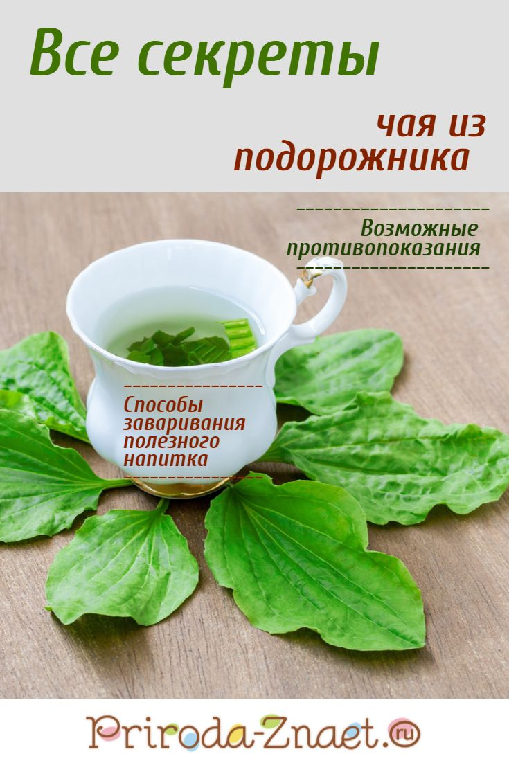 Чем полезен чай из подорожника