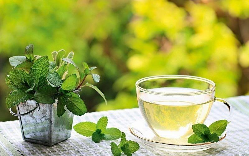 Мята: польза и вред для здоровья организма. мятный чай. рецепты вкусных напитков.