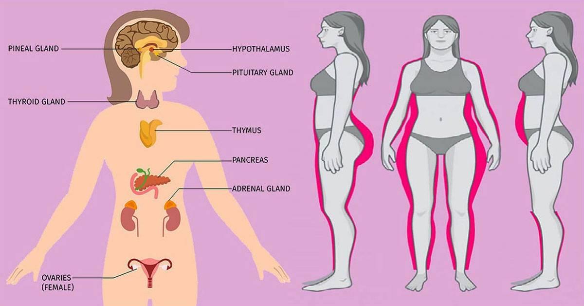 Эстроген: чем грозит изменение уровня женского гормона и как поддерживать норму