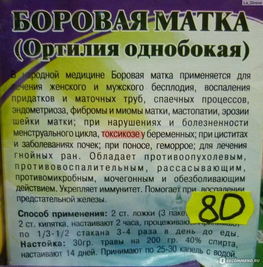 Лечебные свойства «боровой матки» для женщин: что лечит эта трава, применение в гинекологии - при эндометриозе, миоме, климаксе,, при беременности, отзывы