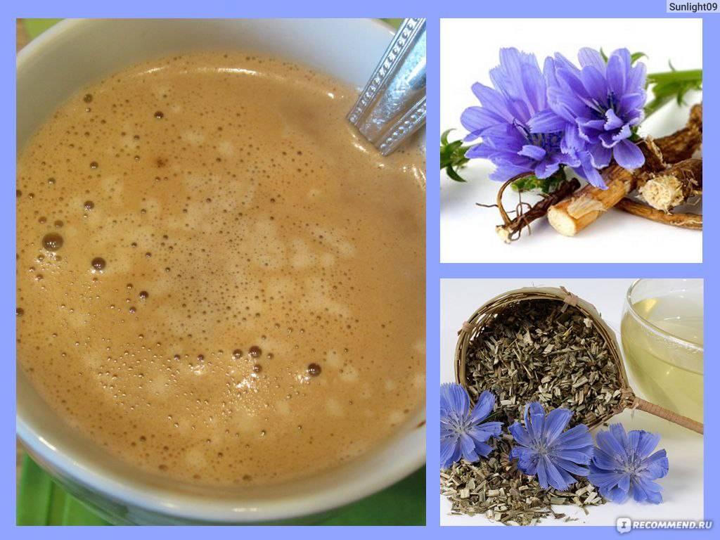 Что лучше и полезнее кофе или цикорий?