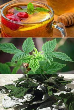 Малиновый чай— полезные свойства и секреты приготовления ароматного напитка