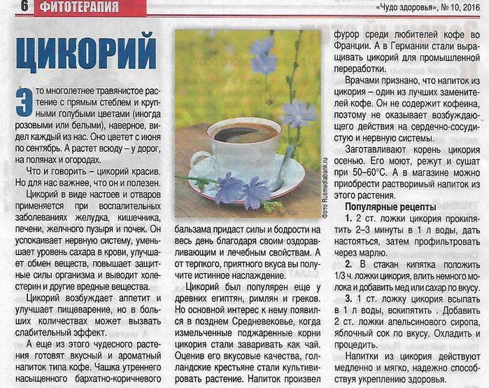 Цикорий » народные средства и народные рецепты