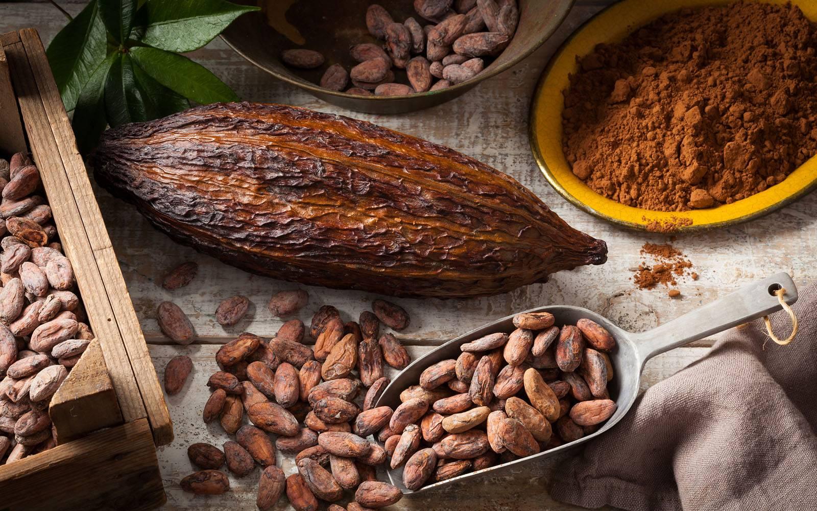 Чем полезен и вреден какао для организма | польза и вред