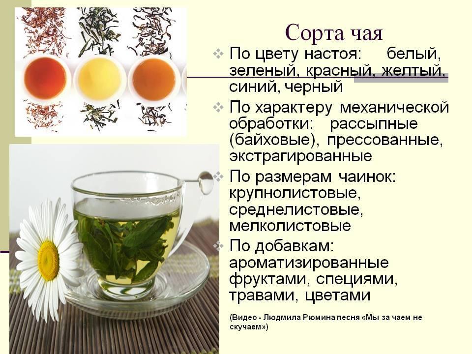 Чай ройбуш: полезные свойства, состав, противопоказания и вред