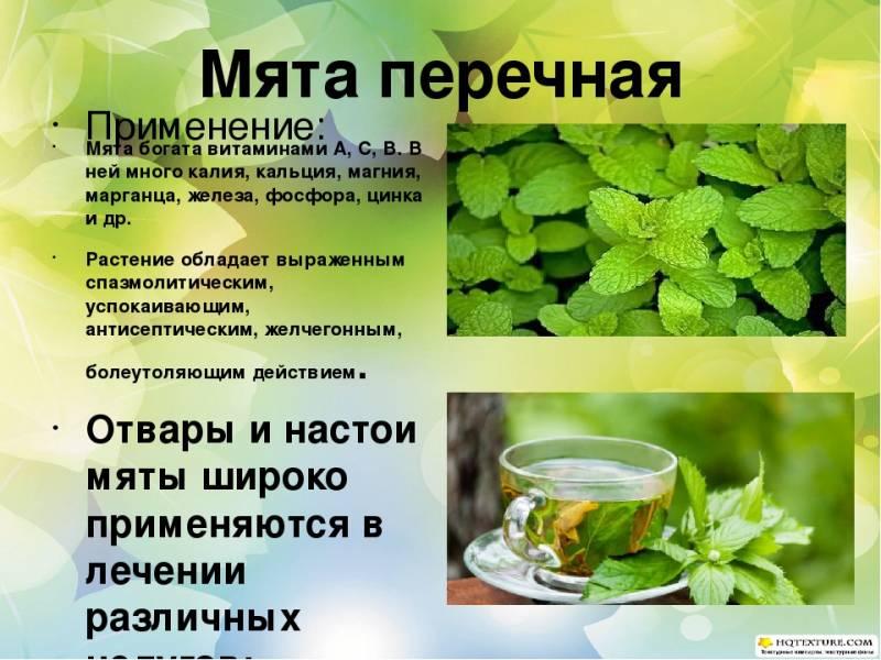 Белый чай - какой сорт выбрать и как его заваривать