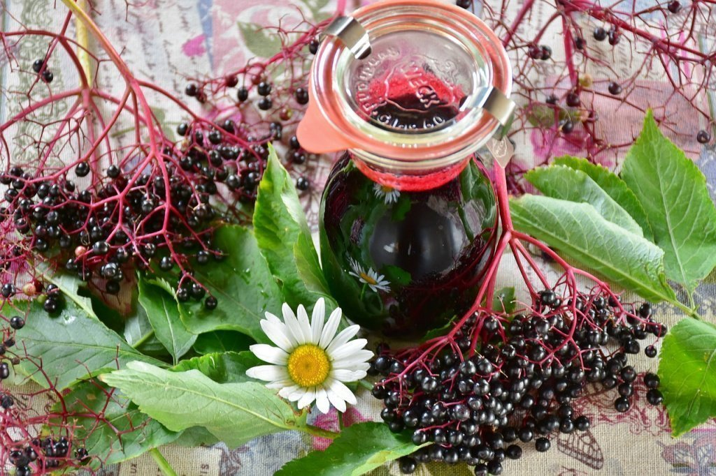 Черёмуха: полезные свойства, противопоказания и непищевое применение ароматных ягод
