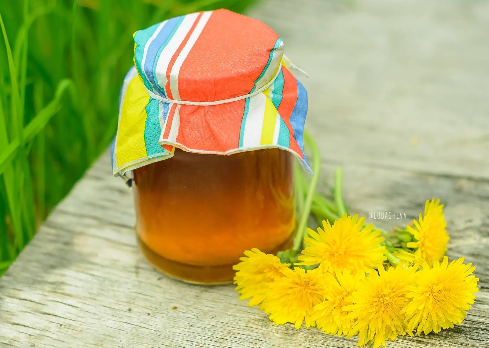 Одуванчики: лечебные свойства, рецепты