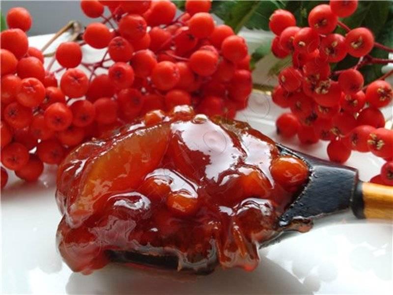 Рябина красная полезные свойства и противопоказания, применение