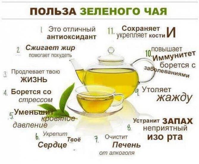 Черный чай: состав, польза и вред для здоровья организма, особенности употребления