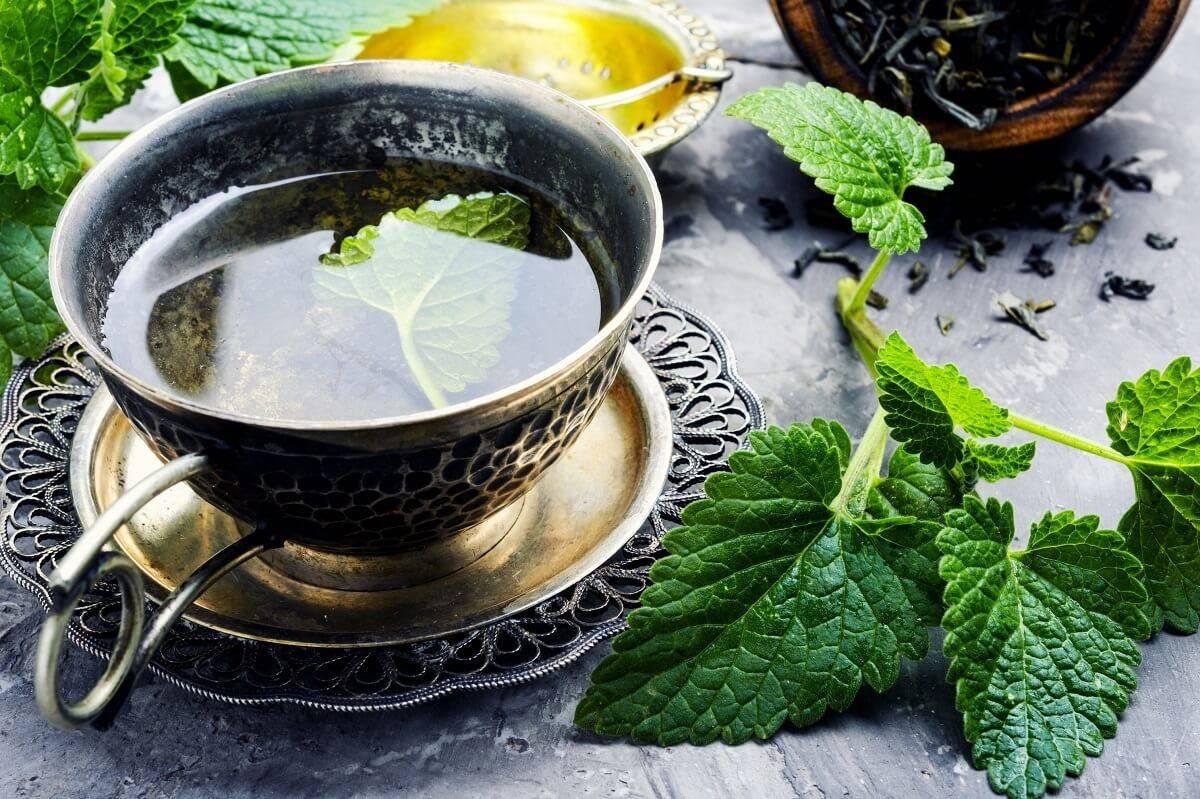 Мелисса— лечебные свойства, применение, противопоказания и рецепты лечения мелиссой