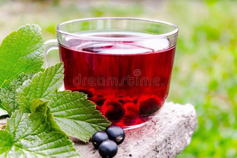 Свойства и рецепты смородинового чая