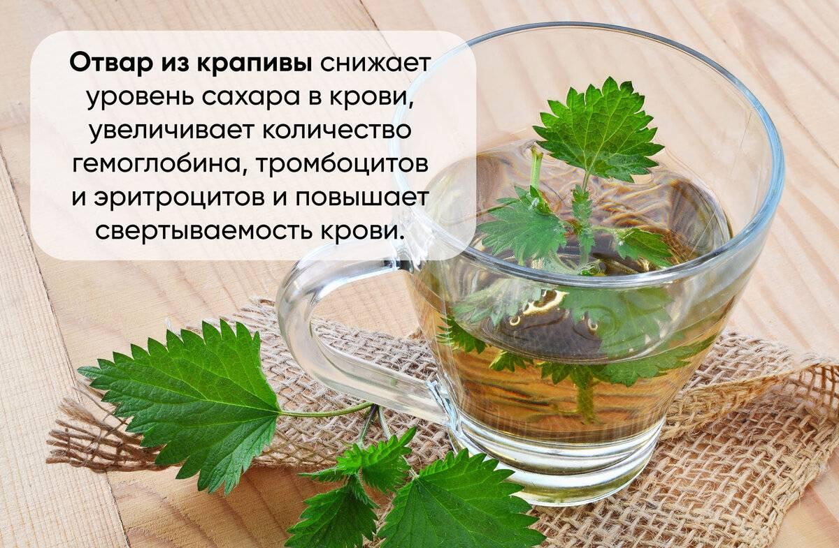 Чай из листьев смородины - польза и вред для здоровья