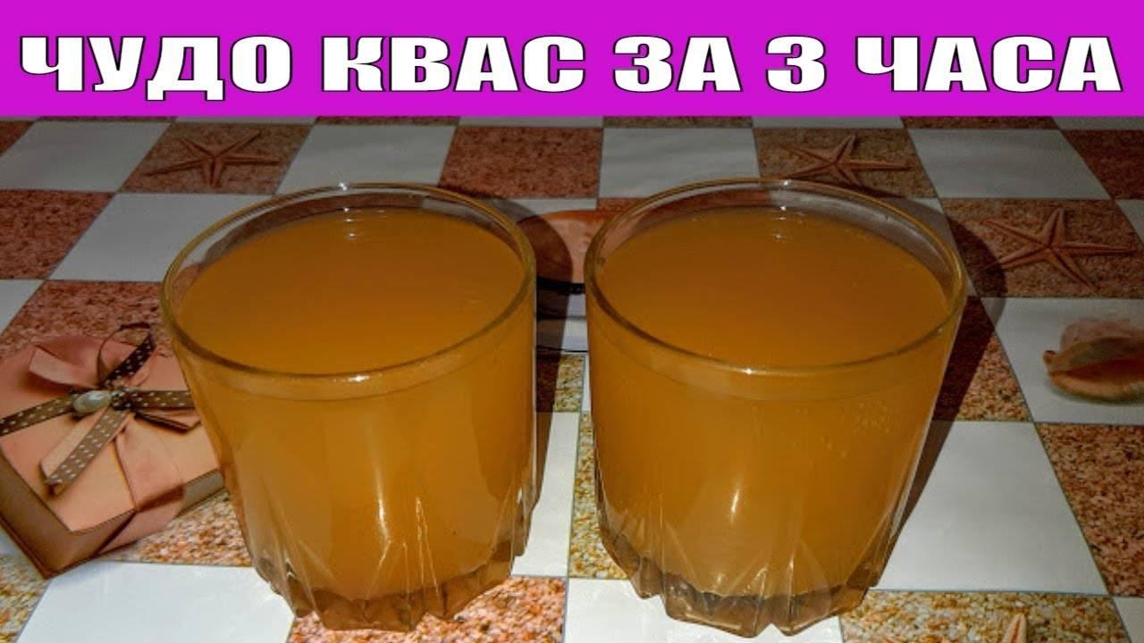 Квас из цикория — 6 рецептов в домашних условиях » новости россии и мира