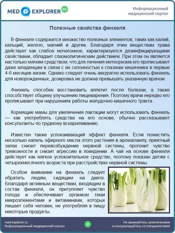 Польза фенхеля: свойства, полезные вещества, показания и противопоказания к употреблению (105 фото)