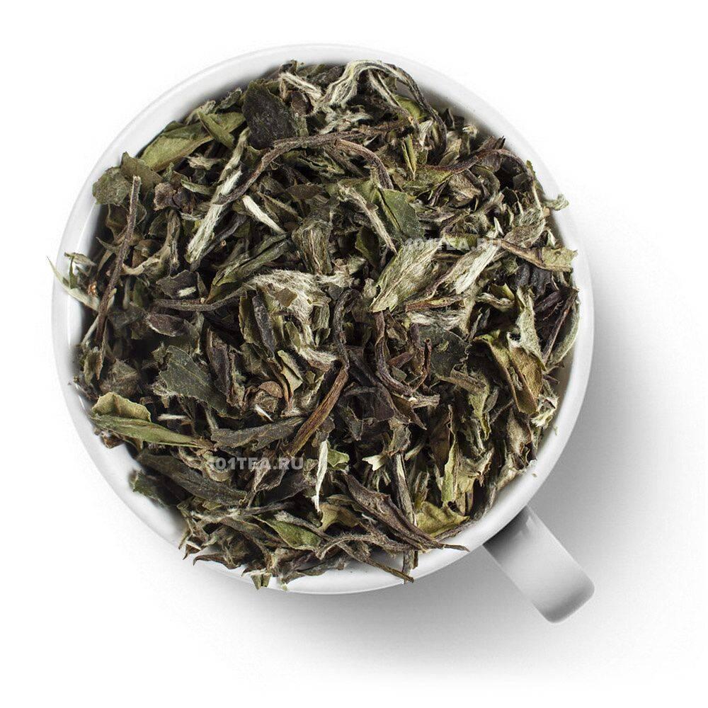 Чай бай му дань (белый пион): полезные свойства, как заваривать