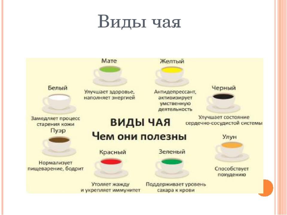 Обзор 9 главных видов и сортов чая от пуэра до типсового