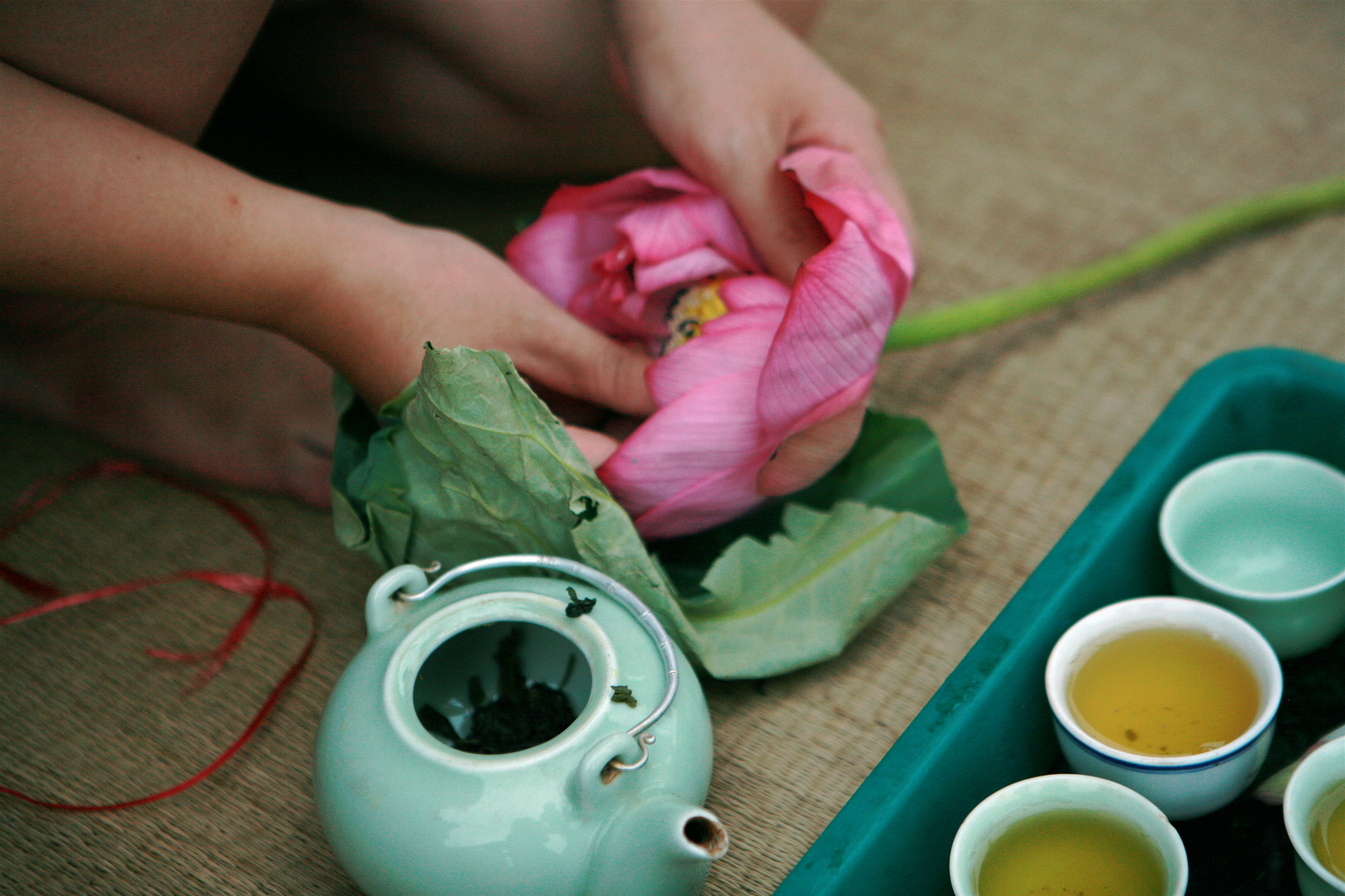 Чай лотос: полезные свойства и противопоказания