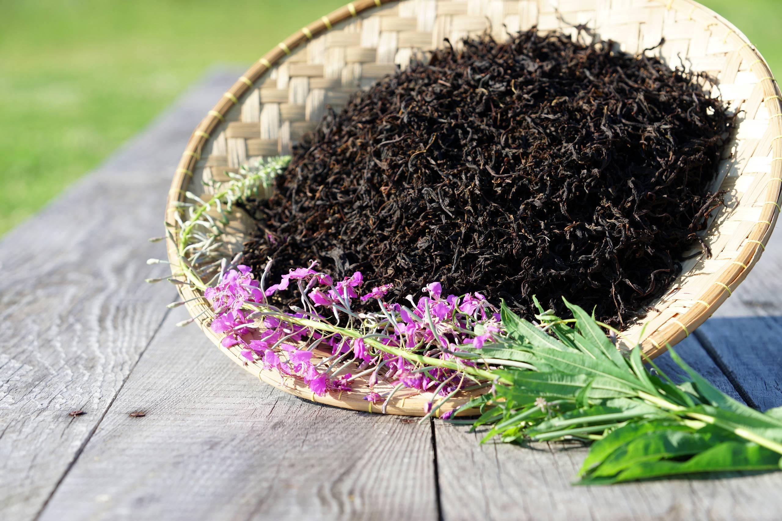 Копорский чай: 17 способов заваривания этого вкусного травяного чая