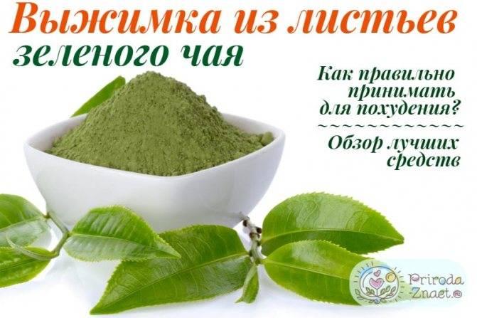 Экстракт зеленого чая - помощь в похудении. миф или реальность?