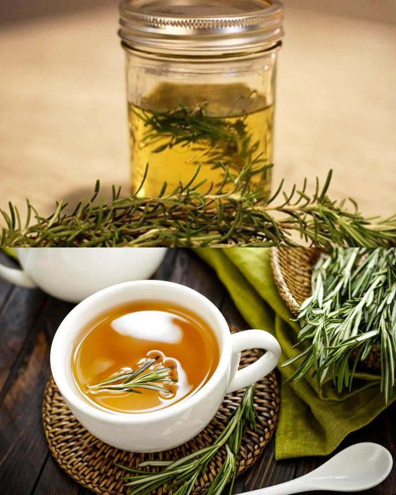 Розмарин – лечебные свойства и противопоказания, показания и приготовление чая, отвара и настойки