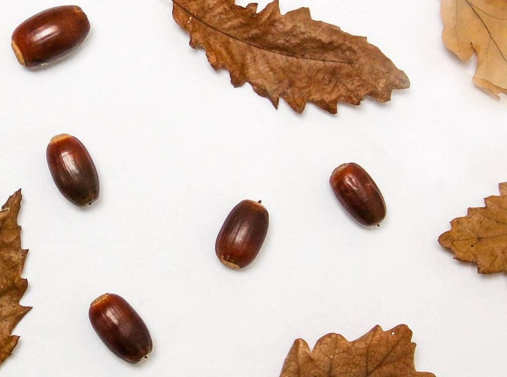 Кофе из желудей – польза и вред, правила приготовления напитка