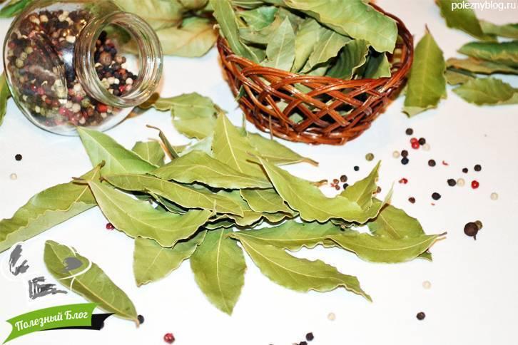 Лавровый лист: лечебные свойства и рецепты