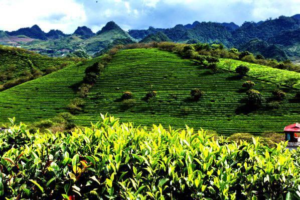 Цейлонский чай: цены, как выбрать и где купить?   mama asia