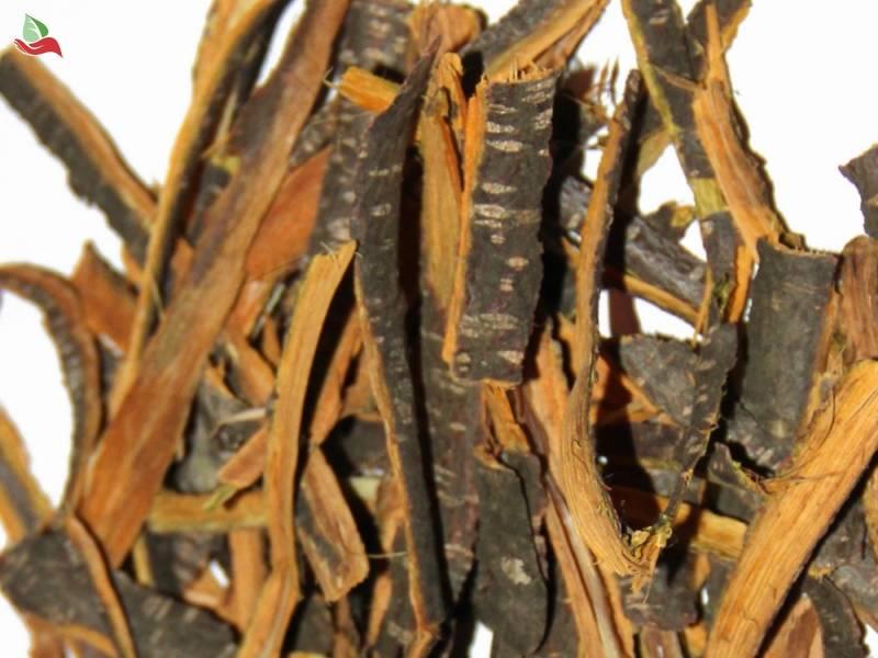 Слабительный жостер, кора крушины – лечебные свойства и противопоказания, применение