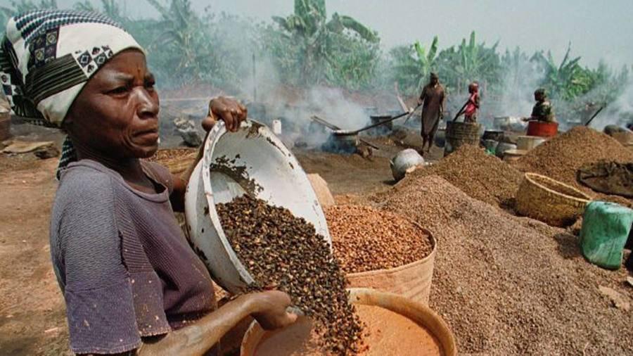 Фрукты африки: фото и описание