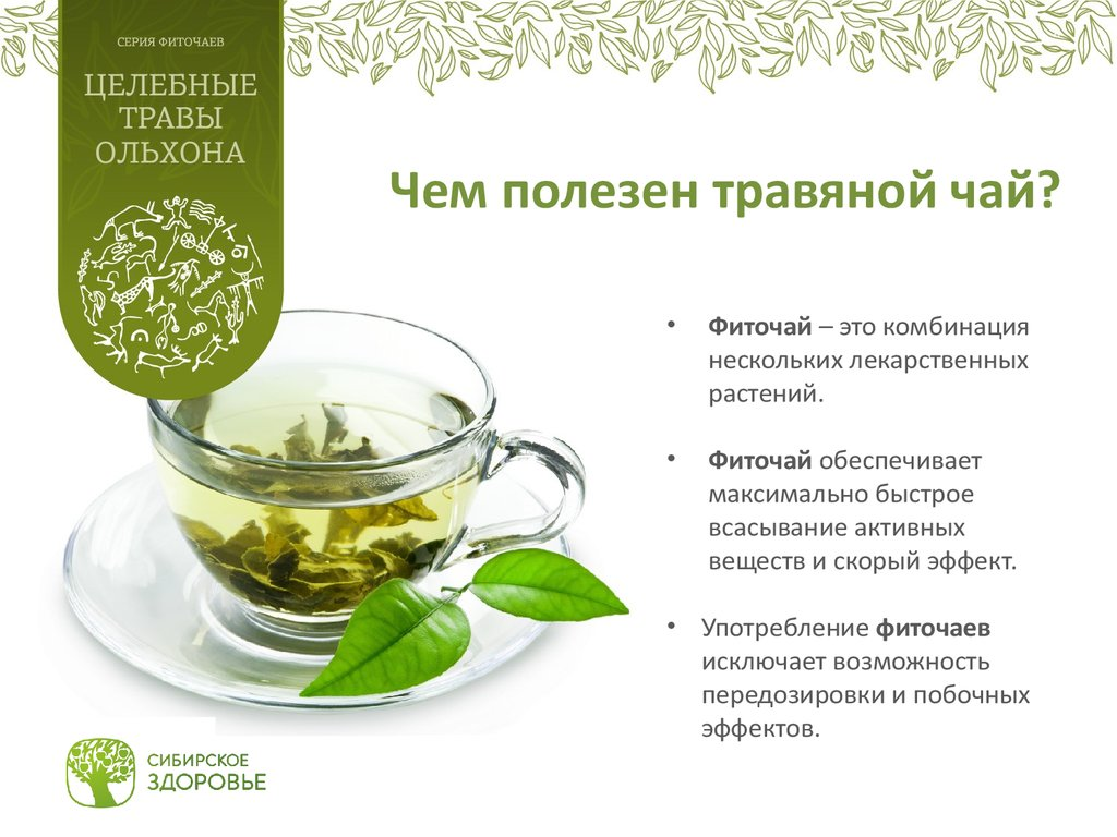 Всё о лечебных свойствах медовой травы (стевии) - применение листьев для красоты и здоровья, а также противопоказания к использованию и отзывы