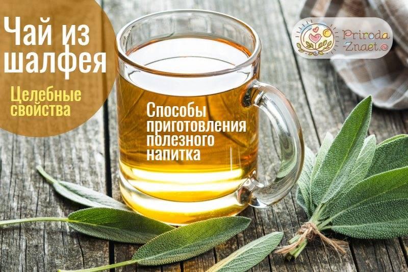 Чай с шалфеем: полезные свойства и противопоказания