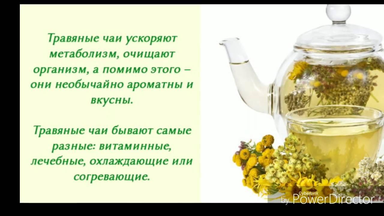 Липовый чай: полезные свойства и противопоказания – польза и вред настоя с липой