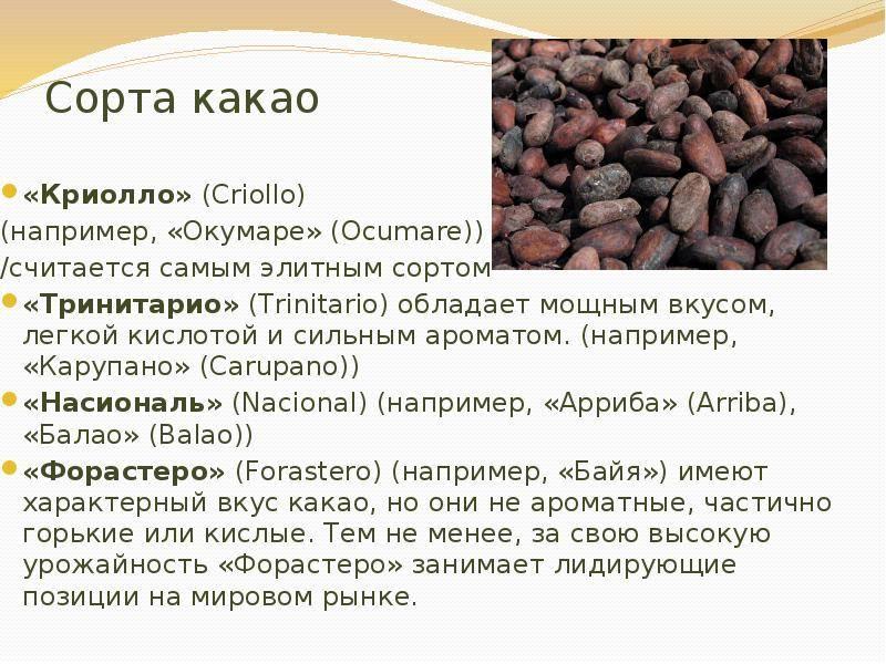 Какао порошок: польза и вред для здоровья, свойства, состав, противопоказания, когда лучше пить