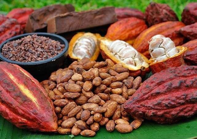 Какао: польза и вред для здоровья, противопоказания к употреблению