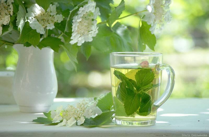 Можно ли при беременности пить чай с мятой и как правильно это делать?