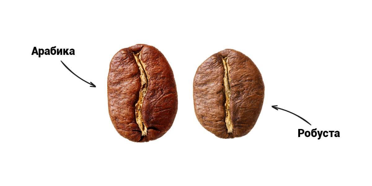Какой сорт кофе полезнее арабика или робуста? | польза и вред