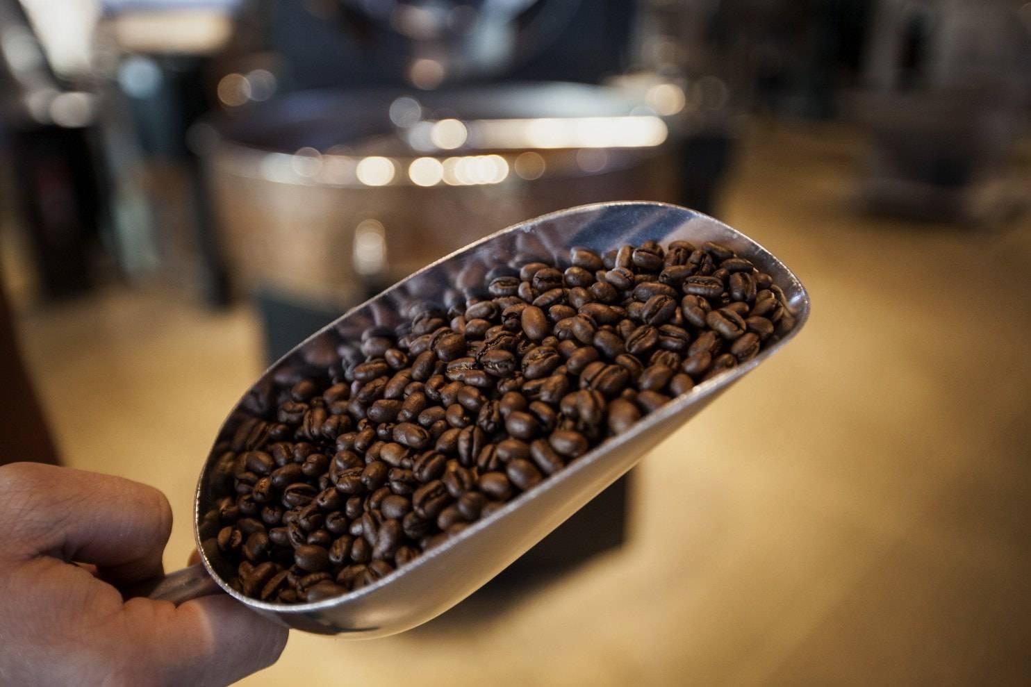 Товароведная характеристика и экспертиза качества кофе и кофейных напитков
