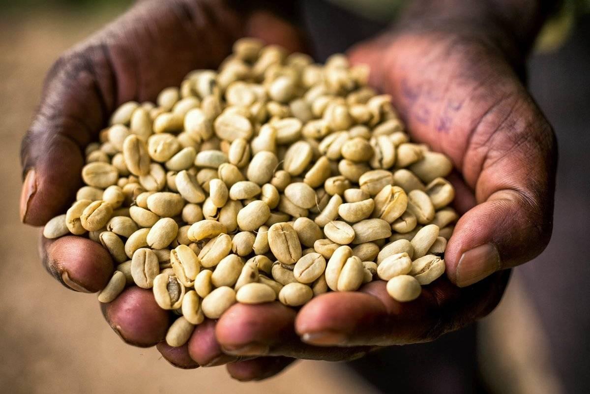 Крупнейшие в мире страны – производители кофе