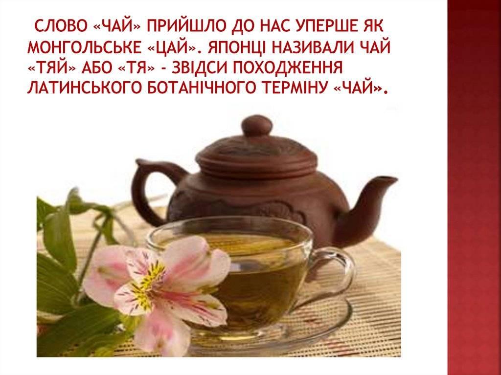 Всё о чае. происхождение чая и его история | чайкофский