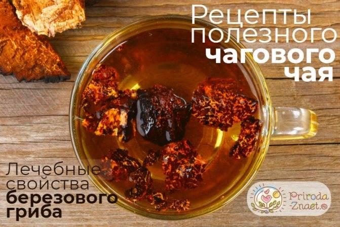 Чай из чаги: полезные свойства и противопоказания, как приготовить, применение