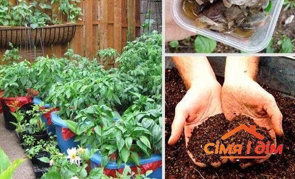 6 способов применения чайной заварки в саду и огороде