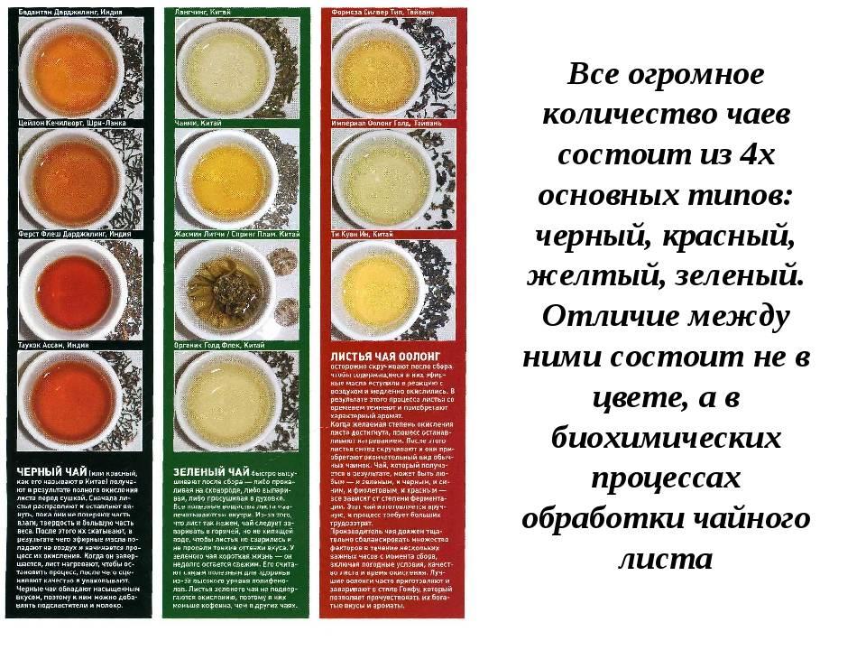 В чем разница между зеленым и черным чаем | в чем разница
